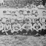 Pelicans 1923